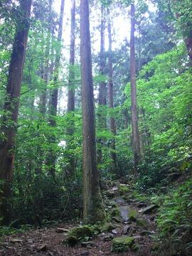 @明神ヶ岳10-6 001s-.jpg