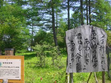 櫛形山 09 6.27 003s-.jpg