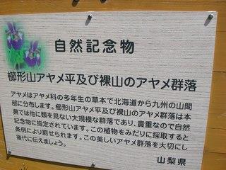 櫛形山 09 6.27 005s-.jpg