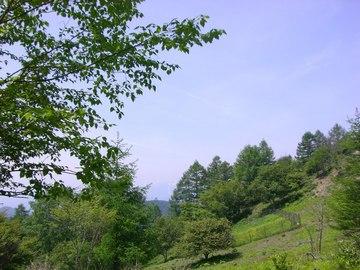 櫛形山 09 6.27 012s-.jpg