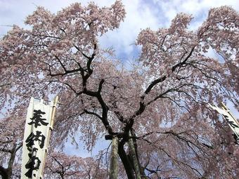 三春 08 009s-.jpg