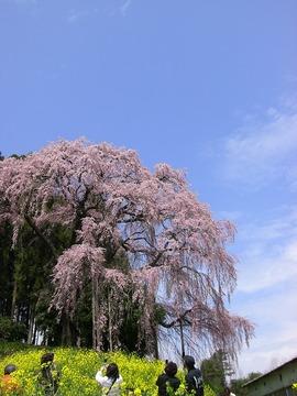 三春 08 039s-.jpg