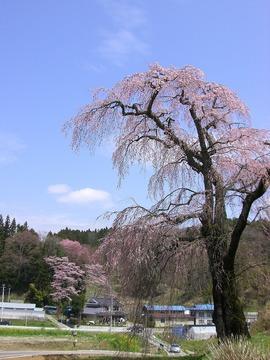 三春 08 048s-.jpg