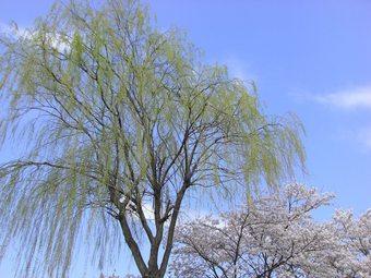 三春 08 062s-.jpg