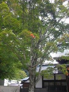 男体山 09 9-22 003s-.jpg