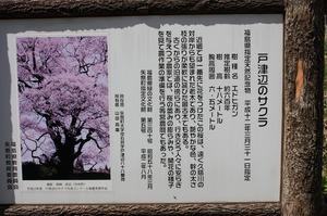 IMG_7036.jpg