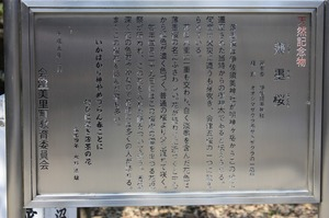IMG_7238.jpg